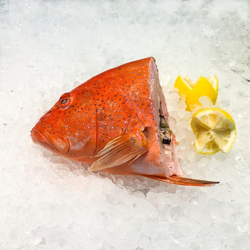 Red Grouper Head (Ang Gau)