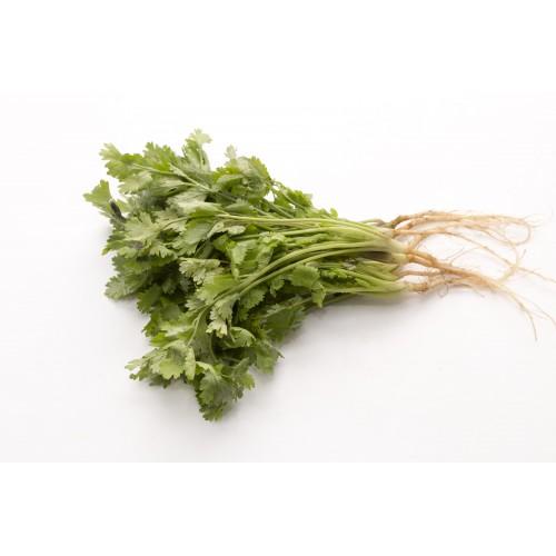 Coriander 香菜